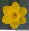 "Golden Aura,  2 Y-Y, J. Lionel Richardson, 1964, Ireland.<br><span class=""ds_text"">Photo #10,299 : Gordon Coombes, South Island, New Zealand</span><br/><span class=""ds_text_exif"">Properties:  HP psc1600, Original Size 548 x 586</span><br>"