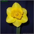"Camelot,  2 Y-Y, J. Lionel Richardson, 1962, Ireland.<br><span class=""ds_text"">Photo #9,582 Oct 08, 2006: Noeline McLaren, South Island, New Zealand</span><br/><span class=""ds_text_exif"">Properties:  PENTAX Optio 33L, Original Size 778 x 762, Exposure 1/60 sec, Aperture f/4.8, Flash used, Focal length 5.8 mm</span><br>"