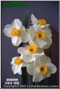 "Geranium,  8 W-O, J.B. van der Schoot, 1930, the Netherlands.<br><span class=""ds_text"">Photo #5,072 : Louise Hardison Linton, Tennessee, USA</span>"