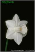 "Guiding Light,  2 W-W, G.W.E. Brogden, 1995, North Island, New Zealand.<br><span class=""ds_text"">Photo #3,333 : Mary Lou Gripshover, Ohio, USA</span>"