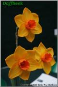 """Piglet,  2 O-R, Noel A. Burr, 2006, England, UK.<br><span class=""""ds_text"""">Photo #13,440 Apr 15, 2008: Becky Fox Matthews, Tennessee, USA</span>"""