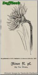 "Rip van Winkle,  4 Y-Y, Unknown Hybridizer, 1884, Ireland.<br><span class=""ds_text"">Historic Image #16,734 : Gertrude Hartland, Cork, Ireland</span>"