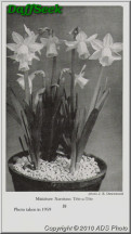"Tête-à-Tête, 12 Y-Y, Alec Gray, 1949, England, UK.<br><span class=""ds_text"">Photo #19,995 : ADS Photo, USA</span>"