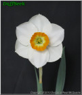 """Pinsey,  3 W-GYO, Denise E. McQuarrie, 2010, South Island, New Zealand.<br><span class=""""ds_text"""">Photo #21,411 : Denise E. McQuarrie, South Island, New Zealand</span>"""