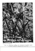 "Flyaway, 12 Y-Y, Roberta C. Watrous, 1964, Washington DC, USA.<br><span class=""ds_text"">Historic Image #31,098 : RHS Yearbook, England, UK</span>"