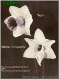 White conqueror