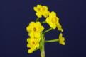 Pirongia Jewel